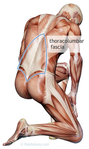 thoracolumbar-fascia-m